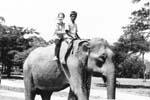 Gail Howard in Thailand 1965. Gail Howard riding an elephant near Chiang Mai, Thailand.